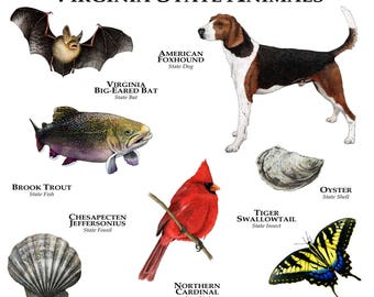 Virginia State Animals Poster Print