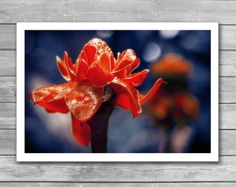 Red Flower, Flower Garden, Tropical Flower, Red Ginger, Flowers, Photo Posters, Photo Art Print, Nature Poster, Red and Blue, Indigo, Photo