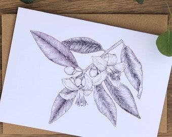 Line Drawn Orange Blossoms