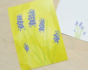 Illustrated postcard Blue Grape