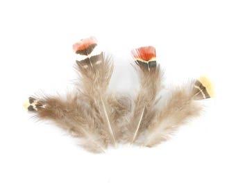 10 x small 7-8cm (77F) brown orange pheasant feather