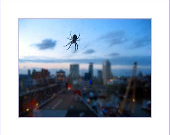 Queen Of Rotterdam - 20x16 Mounted Fine Art Photo Print - Spider on hotel window city skyline at dusk - Nature in urban environment