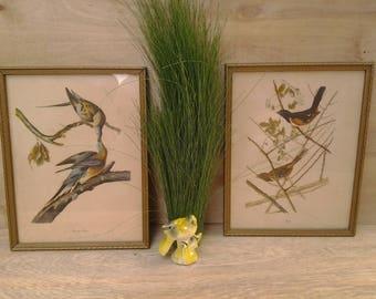 Vintage framed bird pictures - Towhee bird picture - Passenger Pigeon picture - nature pictures - wildlife - bird wall art - vintage birds