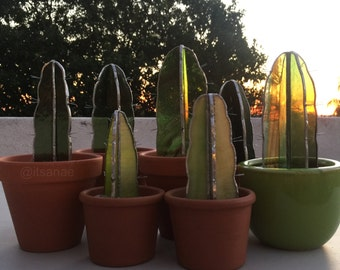 Medium stained glass potted cactus plants (100% draught-tolerant!)