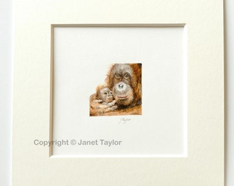 "Tiny painting of an Orang Utan mother and baby:  Miniature watercolour 1.5"" x 1.5""  by Jan Taylor.  Original painting."