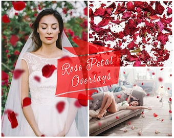 Red Rose Petals Photoshop Overlays, Falling Petals, PNG Overlays, Photo Overlays, Digital Backdrop, Photo Effect,