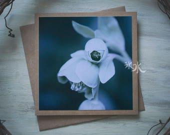 Floral Photo Card - Hellebore
