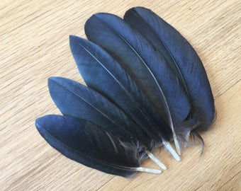 Set of 6 Mini Hooded Crow wing feathers - small feathers, black feathers, natural feathers, real feathers, raven feathers, smudge feathers