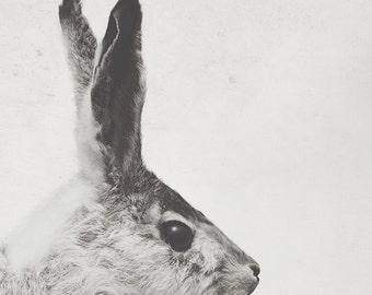 8x12 Bunny, nursery art, rabbit, taxidermy art, fine art photography