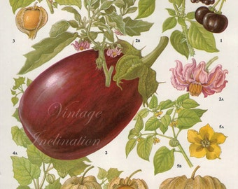 Vintage Botanical Print Antique AUBERGINE, plant print botanical print, bookplate art print, vegetables plants plant wall