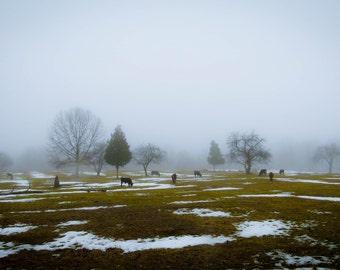 Concord, winter thaw.