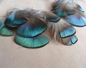 feathers metallic green/blue, set of 2 pairs.