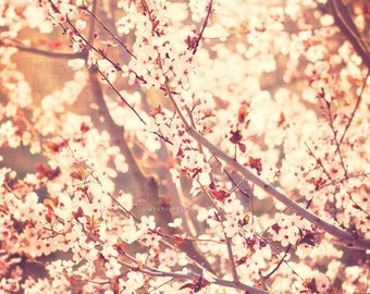 nature photography, spring decor, cherry blossom tree photograph, baby nursery art, pink peach apricot, cottage chic art print