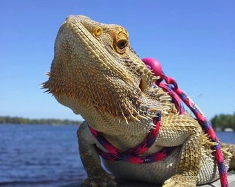 Reptile, Bearded dragon, Lizard leash, not constricting, one size fits most