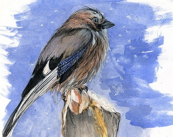 jay in a winter, snow, wildlife, wild bird, original pen and watercolour painting