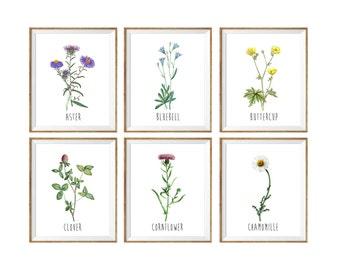 Botanical chart, botanical print, flower art print, floral botanical art, floral wall art, set of 6 flower prints, set of 6 botanical prints