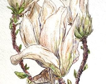Magnolia Series #7, original watercolor painting