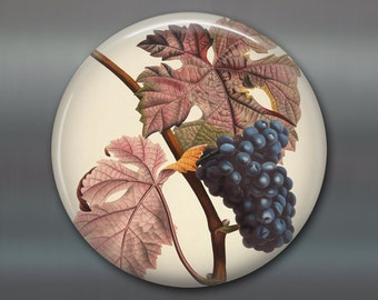 """3.5"""" large round magnet with vintage fruit illustration, vintage grape kitchen magnet - decorative magnet for the kitchen - MA-701"""