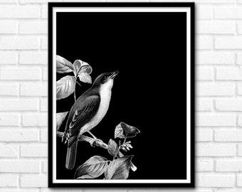 Birds Print, Black and White Prints, Bird Printable Art, Nature Decor, Animals Prints, Wall Decor INSTANT DOWNLOAD - 1028