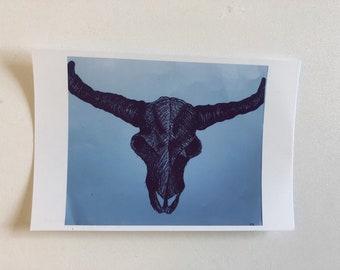 Animal Skull with Horns Print