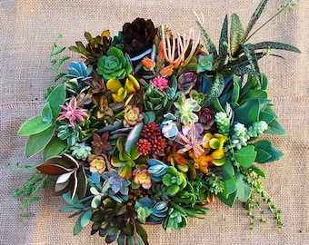 Premium Beautiful Succulent Cuttings Collection