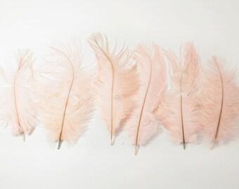 "Petite Ostrich Drab Feathers - Blush Pink, 4-8"" (6pcs)"
