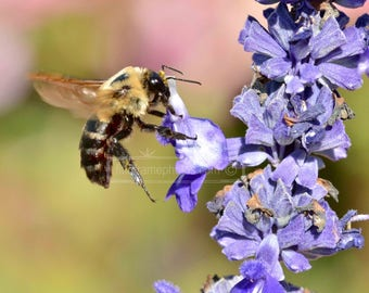 Bee and Purple Flowers