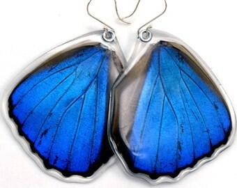 Butterfly Earrings, Real Butterfly earrings, Blue Morpho Menelaus, hind wings, earrings