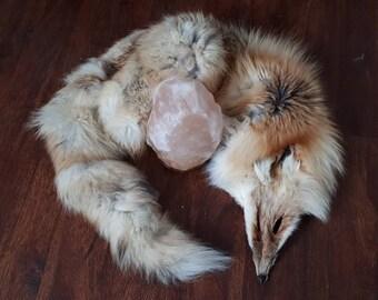 Craft Grade Red Fox Pelt