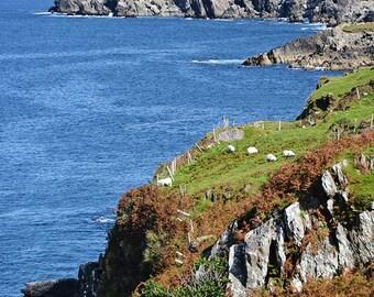 Ireland, Irish, Wild Atlantic Way, Beara Peninsula, Sheep, Slieve Miskish Mountains, Sea, Allihies, Eyeries, Butte, Montana, Coastline