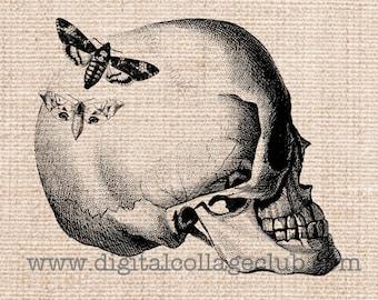 Halloween Skull Clipart Clip Art Iron on Transfer fabric Transfer Digital Vintage Halloween Skull Images Halloween Art Print