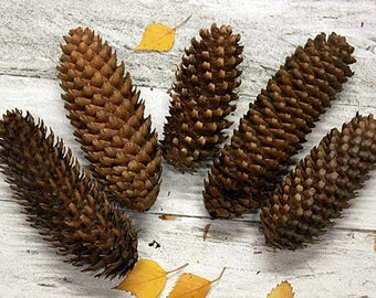 Large Pinecones, Natural Pinecones, Real, Dried, Home Decor, Christmas, Winter, Rustic, Pine Cone