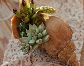 The composition in the shell with succulents from air   dry polymer clay.