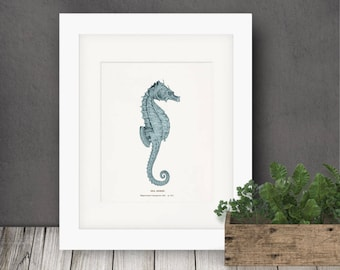Coastal Decor Antique Sea Horse Natural History Nautical Giclee art print - tide pool