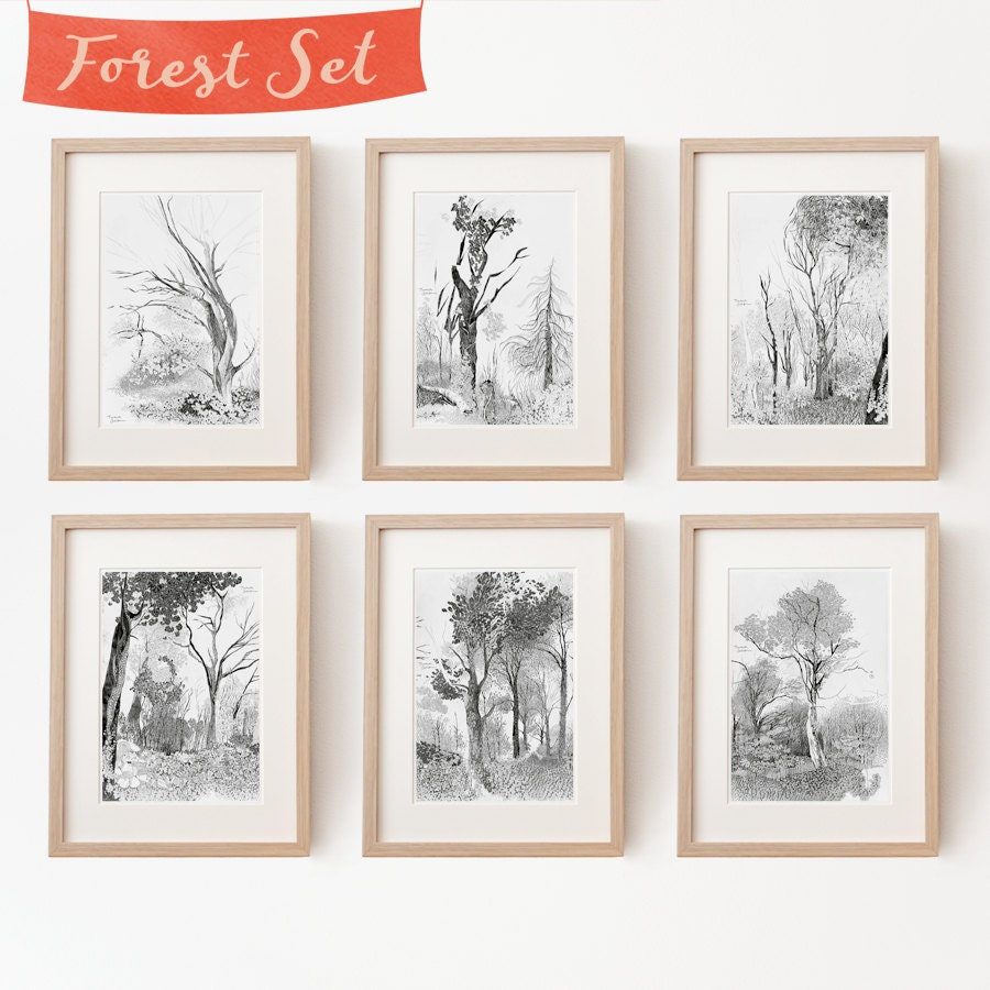 6 baum zeichnungen im set kunstdrucke wundersch ne wald. Black Bedroom Furniture Sets. Home Design Ideas