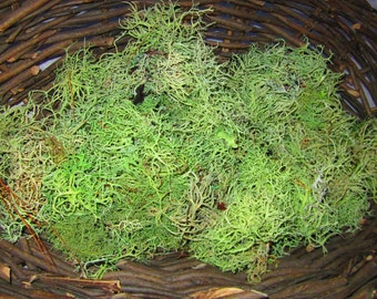 Usnea Beard Lichen, Dried Green Tree Moss, Fairy House Nature Crafting Supplies, Pressed Flowers, Natural Dyes, Old Man's Beard Moss Lichens