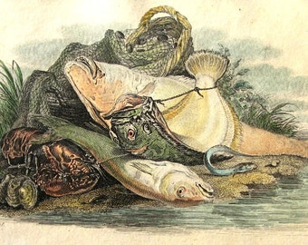 Antique Engraving, Hand Colored Fish Engraving, Fish Still Life Engraving, Vintage Engraving, Antique Sealife Still life Engraving