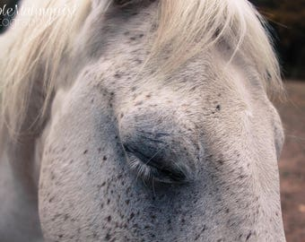 Beautiful Horse Close Up Photo Print // 5x7 // 8x12 // Photography // Fine Art Print