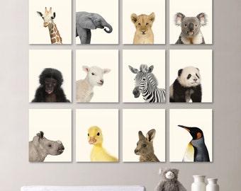 Baby Animal Prints. Baby Animal Nursery Art. Baby Nursery Print Art. Animal Nursery Decor. Jungle Nursery Art. Baby Animal Photos. NS709