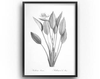 Black and White Botanical Print, Bird of Paradise, Printable Art, Botanical Illustration, Rustic, Farmhouse, Botanical Print Vintage, Prints