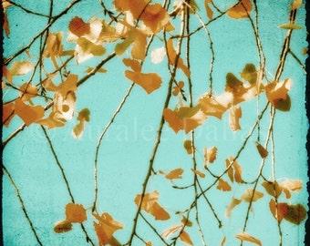 Fall leaves on Aqua Sky The Turning Point 8x8 Fine Art Photograph