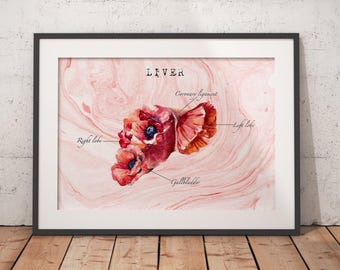 Liver Transplant Liver Cancer Liver Art Anatomy Art Gift For Nurse Medical Art Graduation Gift Medical Office Poster Sobriety Gift