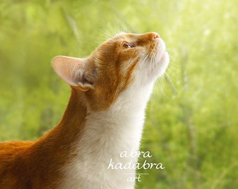 Rustic Red Сat Instant Digital Download Art Photography Printable, rustic sunny cat, green and orange, animal photography