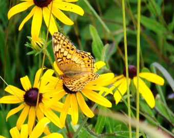 digital download, nature, butterfly, black-eyed susans, woodland, field, farm, yellow flowers, home decor