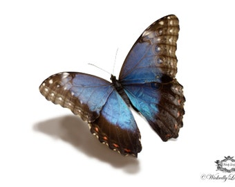 Blue Morpho  Butterfly, 3d Butterfly tattoo,  WickedlyLovely skin art  temporary tattoo (available in different sizes)