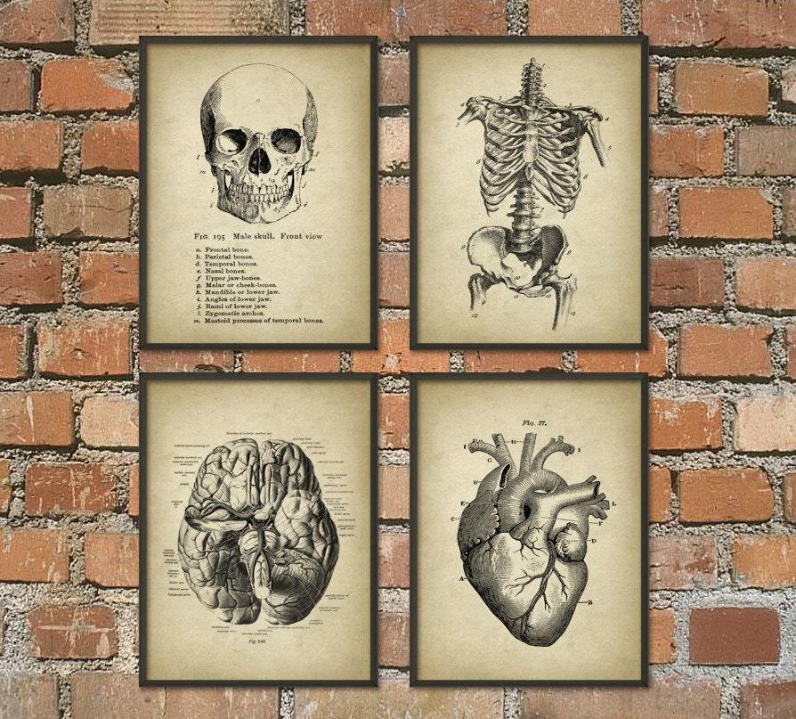 Human Anatomy Wall Art Poster Set of 4 Antique Anatomy