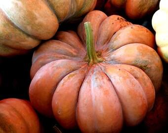 Aromatic Muscade De Provence Pumpkin heirloom seeds, organic orange pumpkin seeds, home grown pumpkin seeds, 6 seeds, large pumpkins