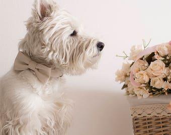 Dog BowTie Collar - Mr. & Mrs. LOVE - in romantic Ottoman color sand
