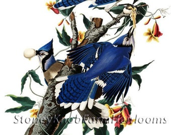 Blue Jays ~ Birds ~ Audubon ~ Cross Stitch Pattern in Color and BlkWht Symbols - Instant Download