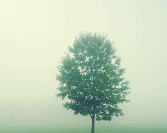 Fog Photograph - Tree Photograph - Green Nature Print - Minimalist Art - Nature Photography - Ohio - Autumn Art - Cottage Decor - Home Decor
